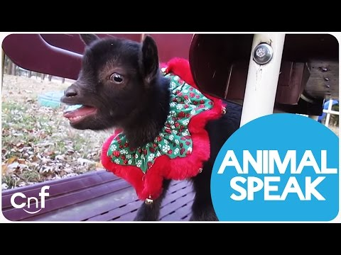 Learn How To Speak Animal Language Easily!