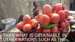 NIgeria is the largest producer of tomatoes in subsahara Africa   Pulse TV