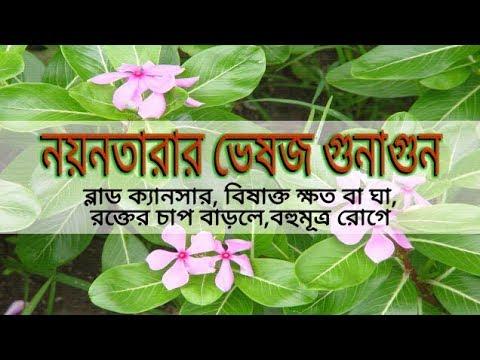 Download Herbal Quality of Nayantara flower (Episode-12)