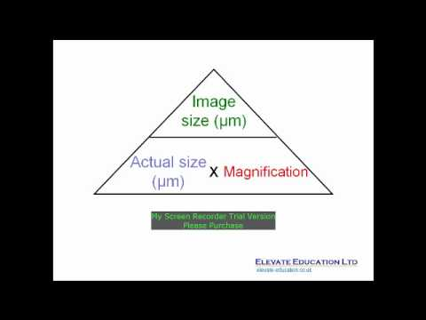 Calculating Magnification (IB Biology) - YouTube