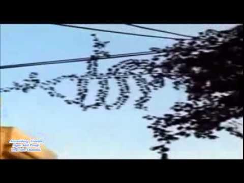Le nom d\'Allah et de Mouhamad par miracle sur un arbre. - YouTube