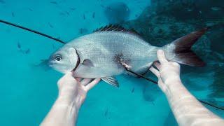 EP 6 - FIRST FISH with OCEANIA! Teriyaki Fish Marinade Recipe   Catch n Fry