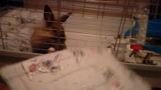 Jak oswoić królika ❤🐰