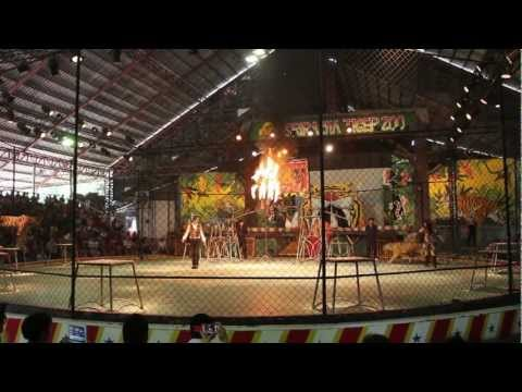 Pattaya Attractions – The Sriracha Tiger Zoo