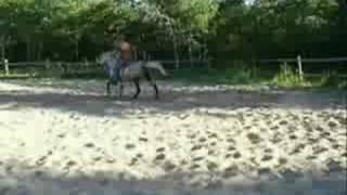 D Whyte Horses