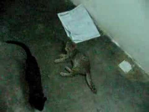 cat love newspaper 1