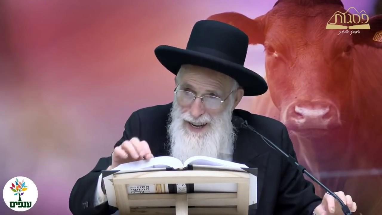 פרשת חוקת - הרב יהודה יוספי HD - חדש!!!