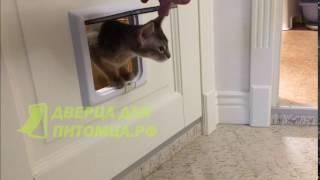 Межкомнатная дверца для кошки.