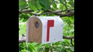 Woodpeckers Bird Houses And Feeders