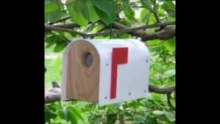 Woodpeckers Bird Houses And Feeders
