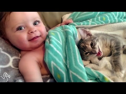 Baby Can't Stop Petting His Little Kitten | The Dodo