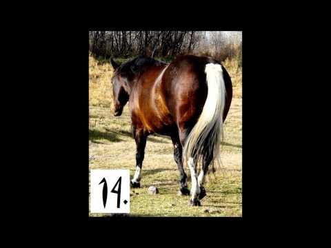 Horse Colors Quiz
