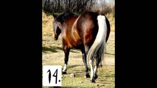 Horse Colors Quiz
