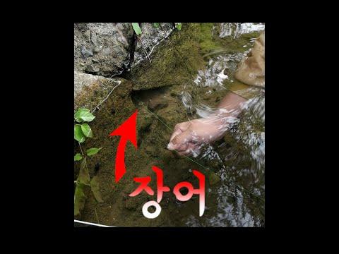 구멍에 자연산 장어가?!!!