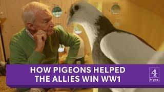 Pigeons: the secret heroes of World War I honoured in art installation