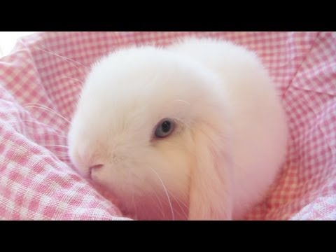 Cute Baby Pig Wallpaper Pure White Baby Bunny In A Basket Youtube