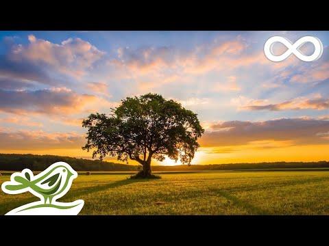 Calm • Relaxing Piano Music & Bird Sounds | Peaceful Sleep Music