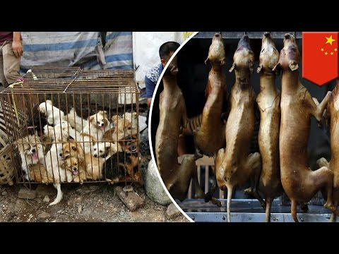 Yulin dog meat festival: activists urge China to ban annual dog eating festival - TomoNews