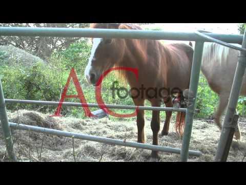 049 Brown Horse Farm Fence