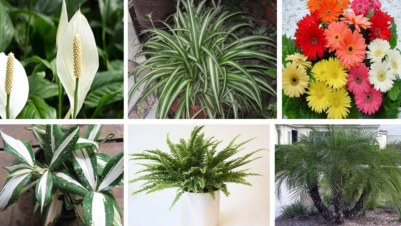 7 Best Indoor Plants That Clean The Air and Remove Toxins || These Plants are Oxygen Bombs By NASA