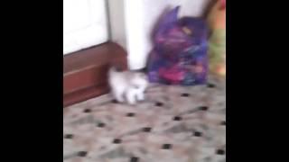 Котёнку 2 месяца.