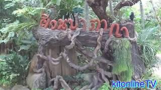 พาชมสวนป่าตากา