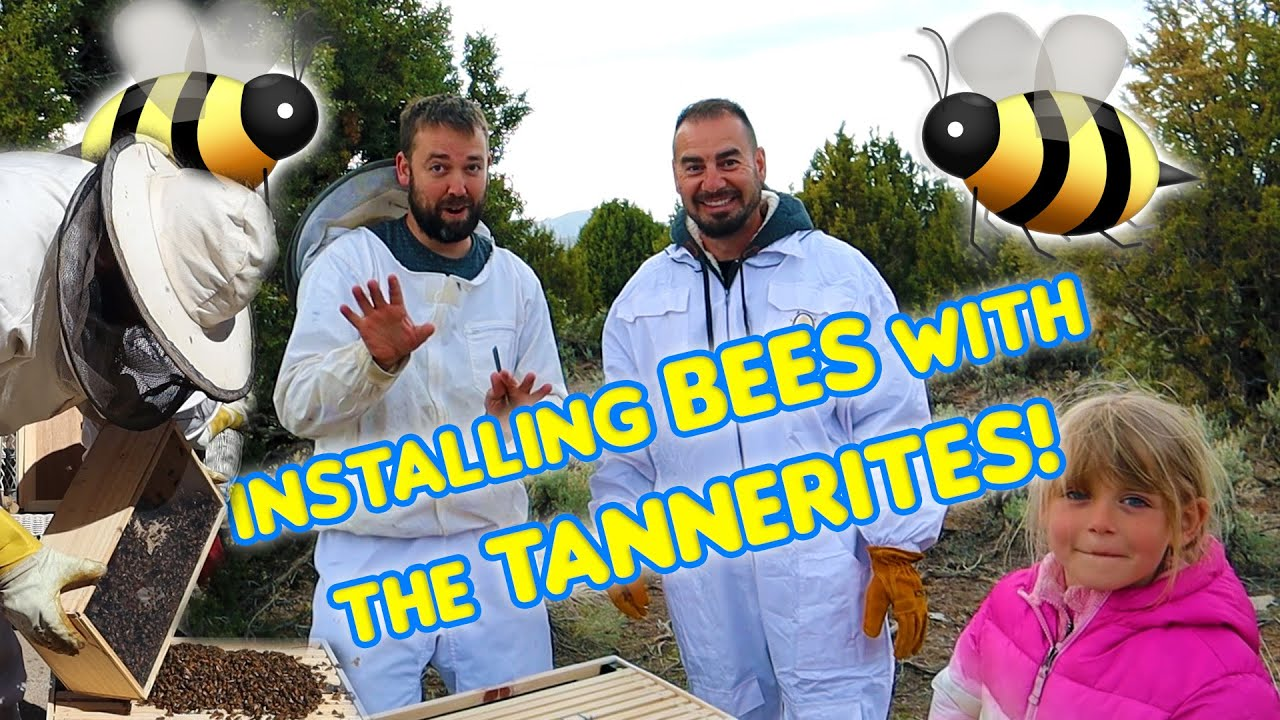 Installing Bees With Tannerites!