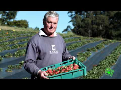 Why Organic Strawberries? Fresh Box Delivery Direct From the Farm.