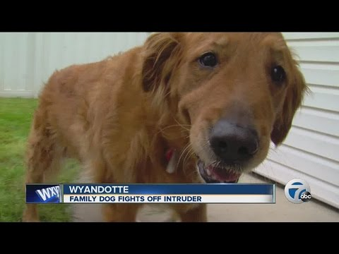 Thumbnail: Family dog fights off intruder