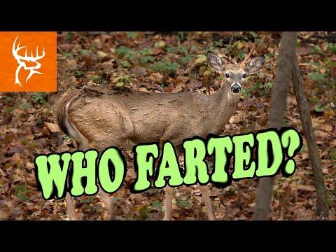 Can Deer really Fart? | Hilarious Hunt | Buck Commander