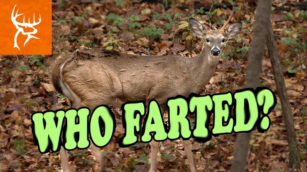 Can Deer really Fart?   Hilarious Hunt   Buck Commander