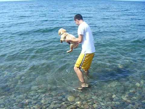 My Dog Swimming Doovi