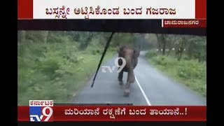 Wild Elephant Chases KSRTC Bus & Rammed Into It In Chamrajanagar