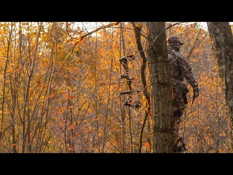 Best Deer Hunting Strategy