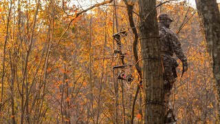Gambar cover Best Deer Hunting Strategy