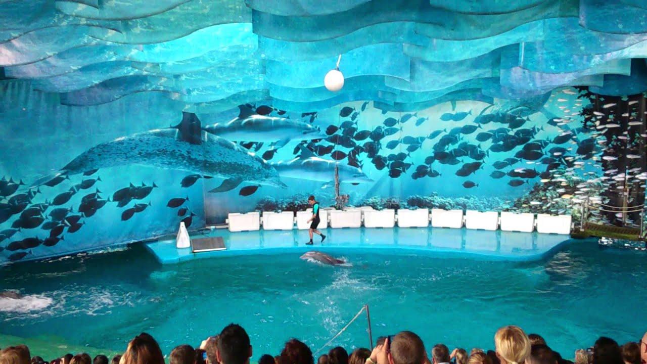 Zoo Barcelona dolphin in barcelona zoo