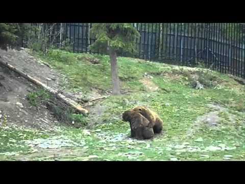 teddy to masturbate using Girls bears