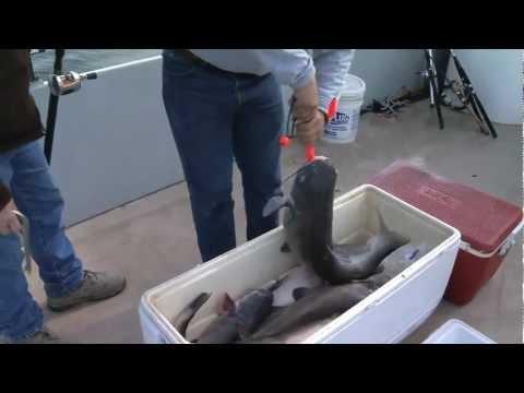 Black's Camp Catfishing 12 28 12