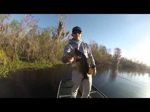 Lake Panasoffkee Fl Bass Fishing 2/28/16