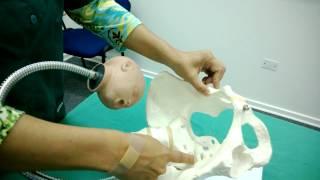 Diametros internos de la pelvis
