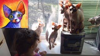 Новый член семьи - кот Канадский Сфинкс /  Our new friend - cat, the Canadian sphynx