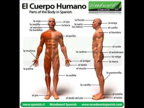 el cuerpo humano y sus partes - YouTube