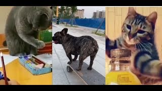 Why I cannot hold a pencil? | Cute and Funny Animals