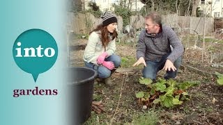 Forcing rhubarb with Toby Buckland & Cheryl Cagiola