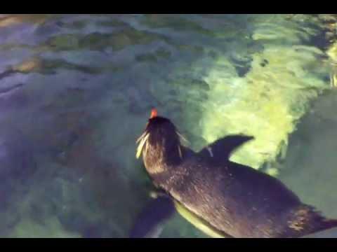 Penguins Coming to the Zoo - SkyscraperPage Forum |Happy Feet Zoo Aquarium