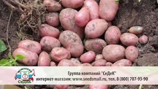 Выращивание картофеля. Дачная экспертиза. Выпуск 6
