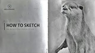 How To Draw A Realistic Otter - Time Lapse Tutorial