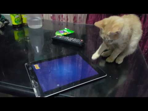 My Smart Cats (Cat Fishing by Purina)