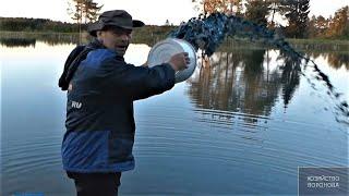 Рабочий способ профилактики рыбы от краснухи