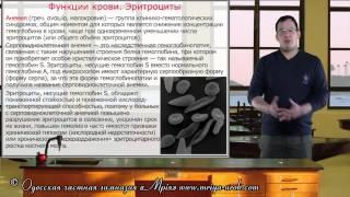 Функции крови. Эритроциты(Эритроциты – это красные кровяные тельца. Они образуются из клеток, которые содержали ядро и избавляются..., 2014-12-23T00:03:55.000Z)